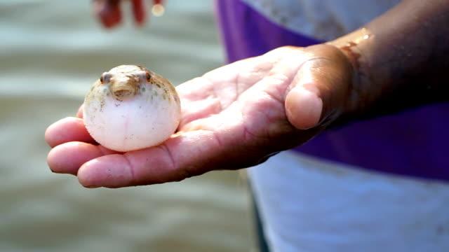 Puffer in fisherman hand