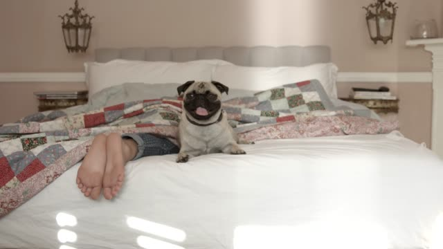 Pug and girl resting on bed