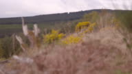 Pull focus from a forest to a tree stump. Ross and Cromarty, Scotland.