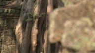 Pull focus from a tree trunk to eroded stone blocks at the Bayon temple in Angkor, Cambodia.