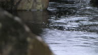 Pull focus from luminescent, flat, flowing water of the River Spean to a damp, moss-covered rock, Argyllshire, Scotland.