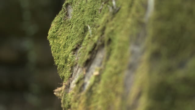Pull focus shot on moss covered stones on the exterior of the Bayon temple at Angkor.