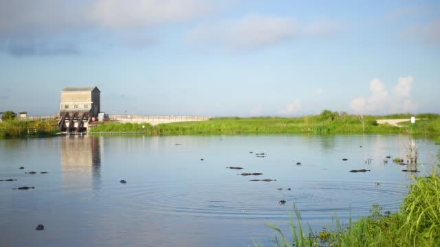 Pump House and Alligators at Lake Apopka