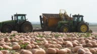 Pumpkins lay in a field as they are harvested for Nestle USA Libbys Pumpkin in Delavan Illinois A large Pumpkin Combine Harvester launches Pumpkins...