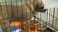 WXIN Puppies In Animal Shelter on October 02 2012 in Indianapolis Indiana