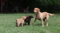 Puppies playing with dog