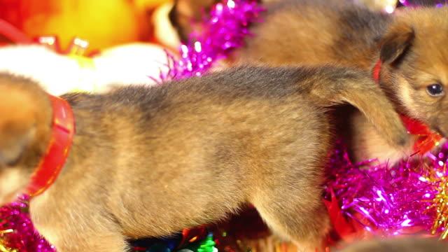 Puppy Christmas Cute