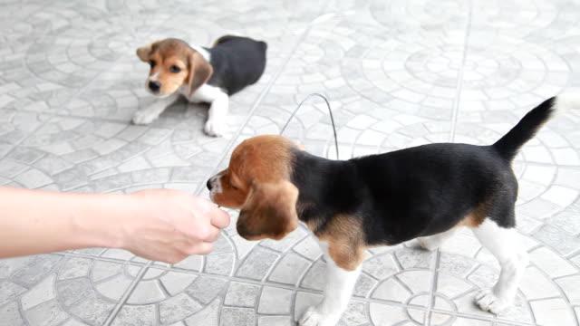 Cucciolo cane che gioca in casa