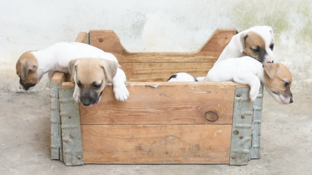 Puppy dogs in wood box