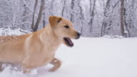 SLO MO Puppy Having Fun Running In Snow