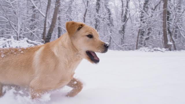 SLO MO Puppy Having Fun Running In Snow