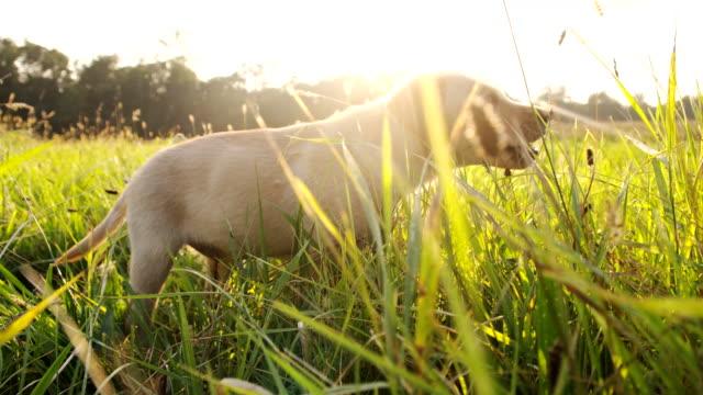 SLO MO Welpe auf dem Rasen