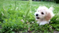 Puppy playing in a gras