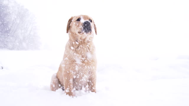 SLO MO Puppy Playing In The Snow