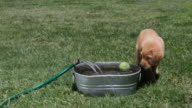 Puppy playing with ball in water