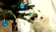 Welpe spielt mit Weihnachtsdekoration