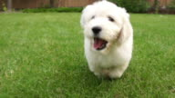 Puppy running with Joy