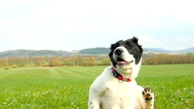 Puppy krassen - seizoen van teken!