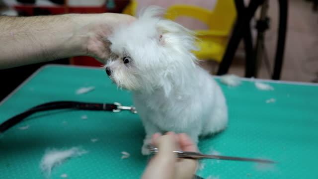Puppy's First Grooming Experience