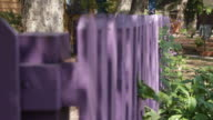Purple fence in front of a house with green plants growing on it