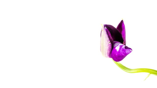 Lila Orchidee Eröffnung