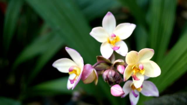 Violetten Orchideen