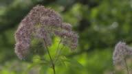 Purple wildflowers blowing in the breeze