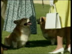 Queen and Prince Philip Collection 4 T28020212 Jubilee tour Australia Queen at Adelaide kennel club with corgis arrival at Barossa Valley drinking...