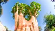 LA DS Quiver Tree
