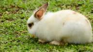 Kaninchen Essen Karotten