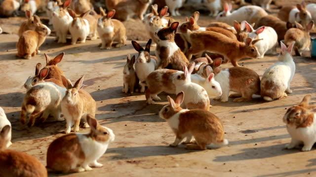 Kaninchen stehen und laufen auf der Bauernhof