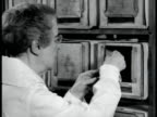 RESEARCH Rabbits in lab cages male taking rabbit out of cage Mice in cages woman holding mouse Pathologist Maude Slye w/ microscope Dr CC Little at...
