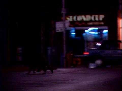 Raccoon crosses street at night, Chicago