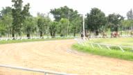 Race horse in the field.