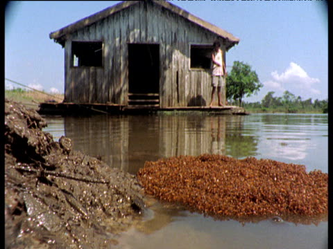 Raft of fire ants lands on shore of Amazon river, wooden hut and fisherman in background