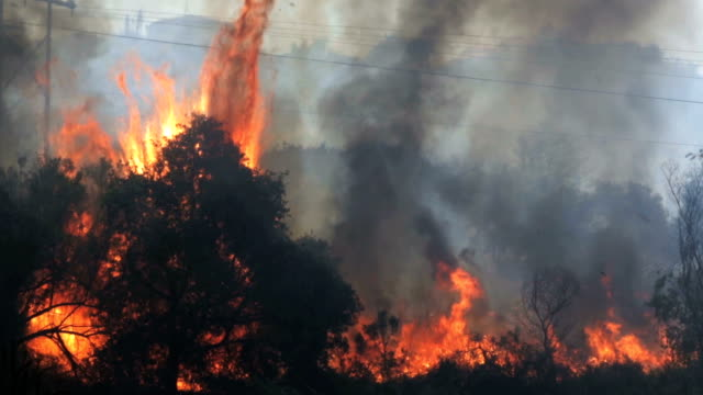 Raging Bushes and Trees on Fire in Southern California