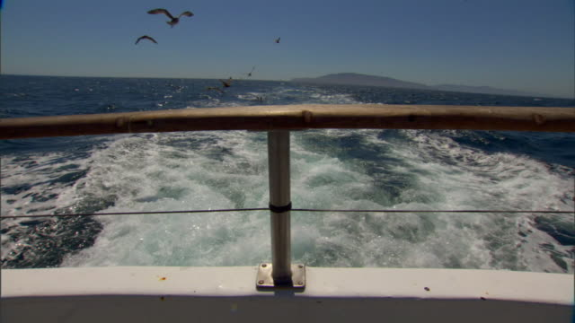 Railing across stern of boat in FG wake amp flock of seagulls amp pelicans flying around behind boat