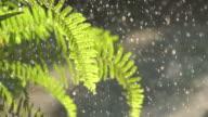 Rain Drop On Fern Slow
