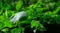 rain drop on green leaf