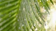 SLO MO LD Rain falling heavily on the palm leaves