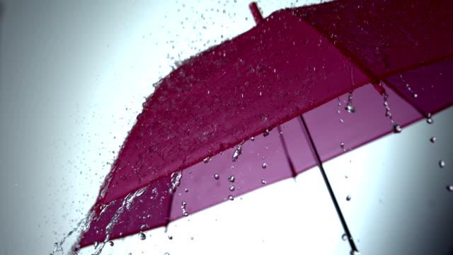 Pioggia che cade su Rosa ombrello