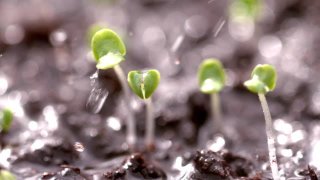 Rain falling on small plant
