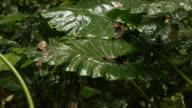 Rain Forest at Refugio Nacional Gandocamanzanillo on December 14 2012 in Manzanillo Costa Rica
