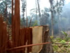 Rain forest deforestation Area of forest where trees have been felled with logger standing close to stumps / remains of felled trees / smoke drifting...