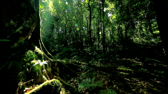 Rain forest,  Dolly shot