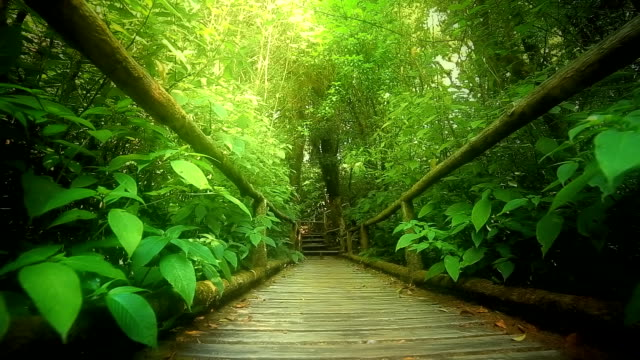 Rain forest,  Dolly shot