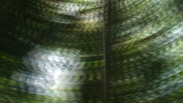 Rain forest trees spinning