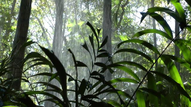 Regen Sturm