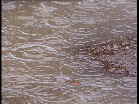 Raindrops fall into puddle on savanna