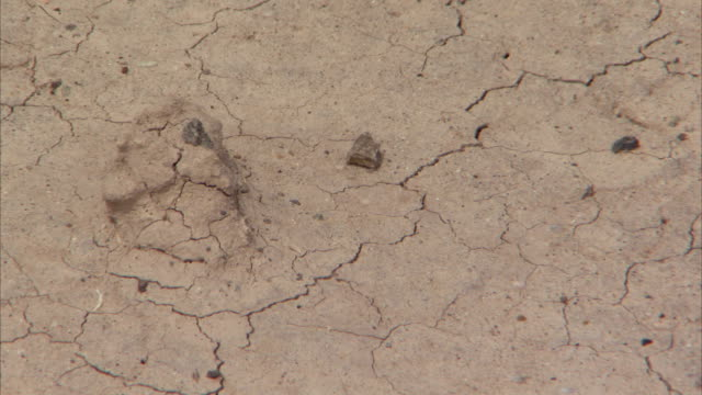 Raindrops fall on dry, cracked earth before evaporating. Available in HD